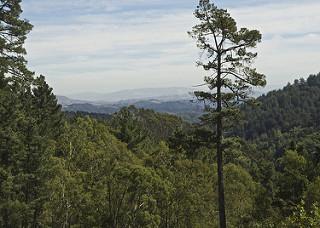 redwoodregional_sm